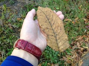 秋を古い1眼で撮る.jpg