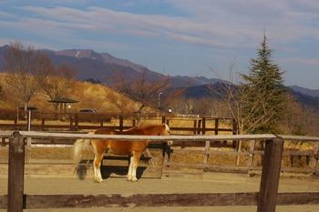s_馬の写真1.jpg