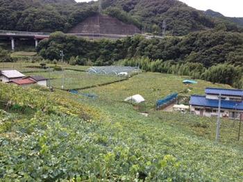 山梨県勝沼ぶどう狩り3.JPG